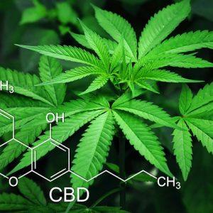 Cannabis Packaging Market